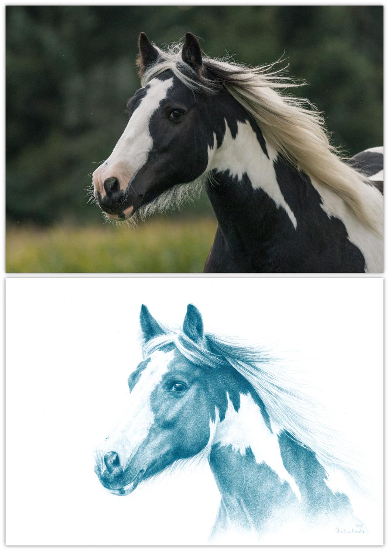 Buntstift, Buntstiftzeichnung, Hochwertige Tierzeichnungen, Kunstdruck, Kunstprint, Pferdeportrait, Pferdezeichnung, Tier malen lassen, Tier zeichnen lassen, Tierportrait, Tierportraits, Tierzeichnung, Tierzeichnungen, zeichnen, Zeichnung, Zeichnungen nach Foto, Zeichnungen nach Fotovorlage