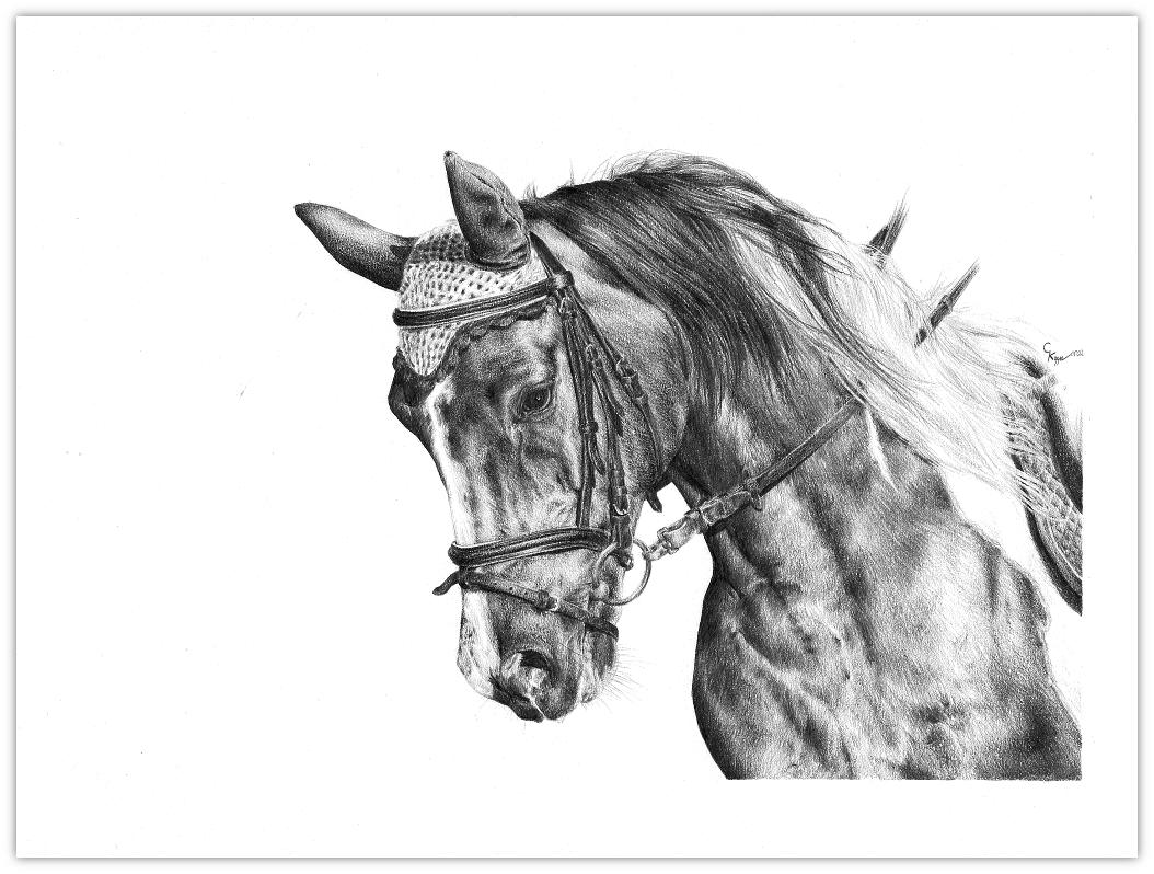 Pferdezeichnung Bleistiftzeichnung Zeichnung Tierportrait Pferdeportrait