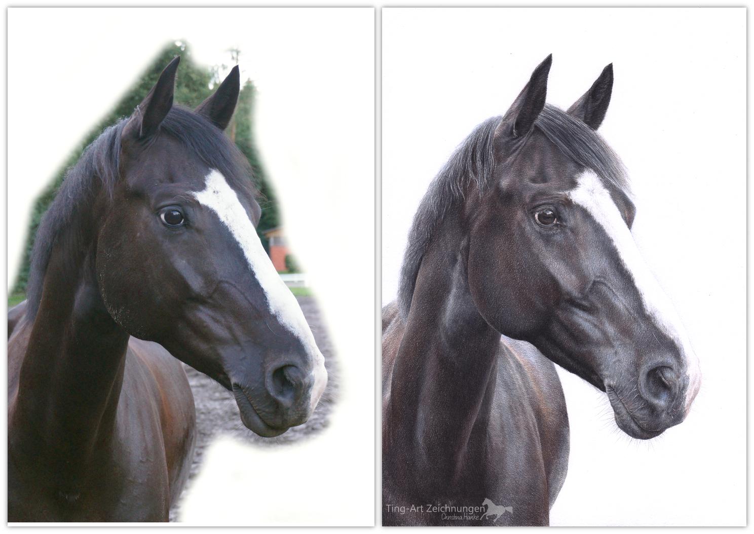 Zeichnung nach Foto Fotovorlage Vorlage Pferdezeichnung Buntstiftzeichnung Pferdeportrait Pferd Tier zeichnen lassen malen
