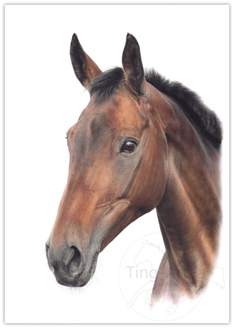 pferd, pferdeportrait, Pferdezeichnung, Tierzeichnung, tierportrait, buntstift, buntstiftzeichnung, bntstiftportrait, Realismus