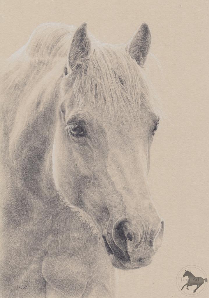 Golden Lady, Zeichnung, Bleistift, Bleistiftzeichnung, drawing, Pferdezeichnung, Pferd zeichnen, zeichnen, Pferd, Pferde