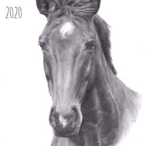Zeichnung, zeichnen, Pferdezeichnung, Rückblick, Throwback, drawing, draw, horse drawing, Bleistift, graphite, pencils, Bleistiftzeichnung, Fotorealismus, Photorealism, Fortschritt, improvement
