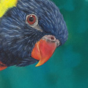 Lori, Papagei, parrot, drawing, Zeichnung, zeichnen, Pastell, pastel, Pastellzeichnung, pasteldrawing, bunt, colour, color, colourful, colorful, art, artist, Farbe, farbig, Pastellstift, C. Hanke, Hanke, Christina, lory, wildlife, wildlifeart, wildlifeartist, Wildtier