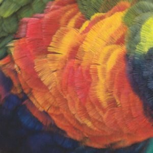 Lori, Papagei, parrot, drawing, Zeichnung, zeichnen, Pastell, pastel, Pastellzeichnung, pasteldrawing, bunt, colour, color, colourful, colorful, art, artist, Farbe, farbig, Pastellstift, C. Hanke, Hanke, Christina, lory, wildlife, wildlifeart, wildlifeartist, Wildtier