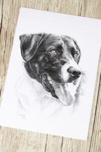 Zeichnung, zeichnen, Bleistift, Bleistiftzeichnung, Bleistiftskizze, Skizze, Porträt, Hund, Hundezeichnung, Hundeportrait, Portrait, Auftrag, Tier zeichnen lassen, Auftragszeichnung, Tier malen lassen