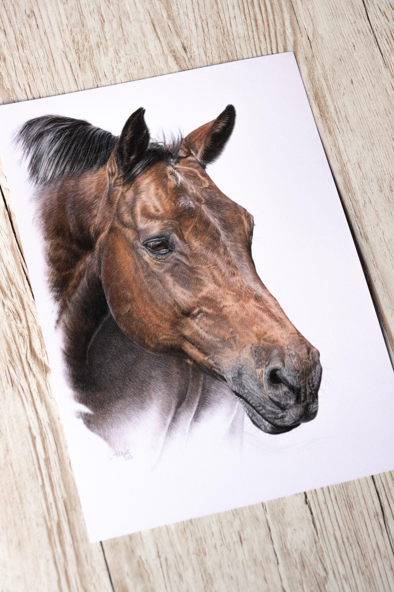 Pferd, Pferdezeichnung, Zeichnung, zeichnen, Buntstift, Farbstift, Pferdeportrait, Pferdezeichnung, Tierportrait, Auftragsmaler, Künstler, Tierkünstler, Tierzeichner