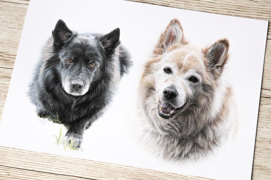 Zeichnung, zeichnen, Buntstift, Buntstiftzeichnung, Hund, Hundezeichnung, portrait, Tierportrait, Buntstiftbild, Auftragszeichnung, malen lassen