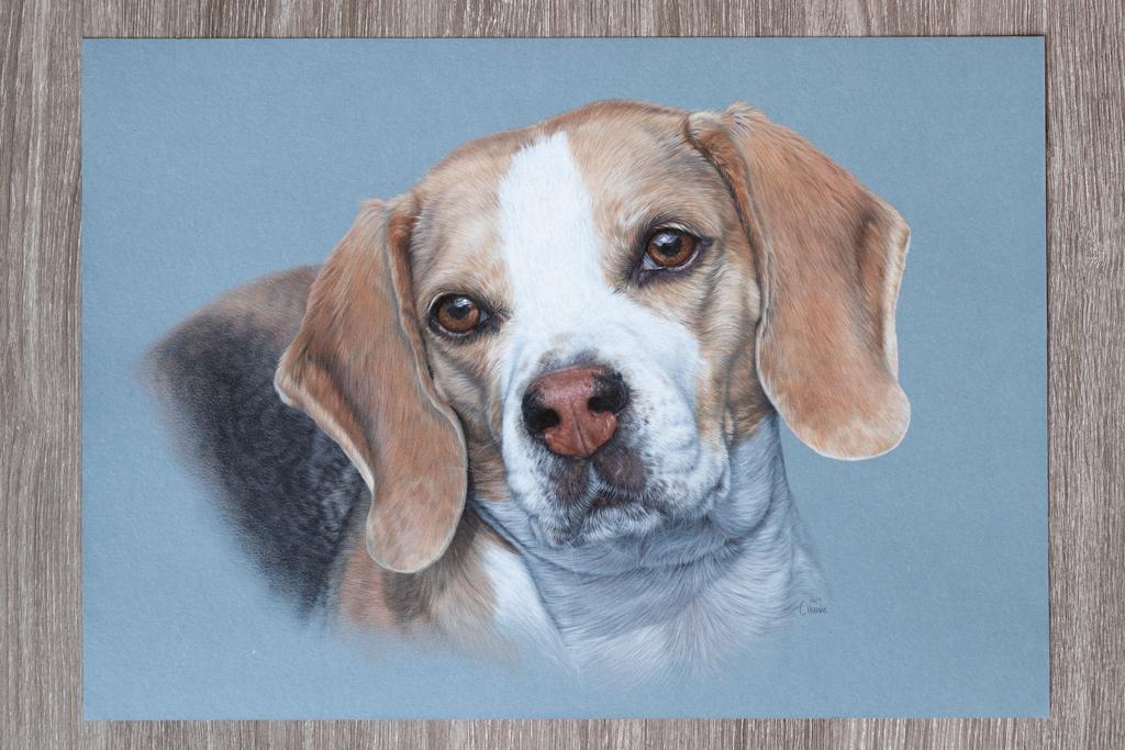 Beagle, Zeichnung, Buntstift, Paint On, Clairefontaine, blauer Hintergrund, zeichnen, Porträt, Hundeporträt, Portrait
